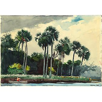 Winslow Homer - Red Shirt Homosassa Florida Poster Print Giclee