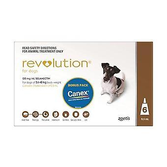 Revolution brun 6 Pack