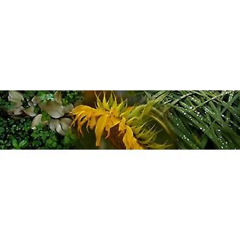 Gros plan des feuilles avec fleur jaune Poster Print
