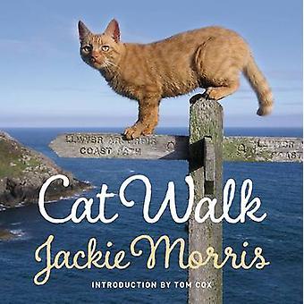 Cat Walk by Jackie Morris - 9781909823273 Book