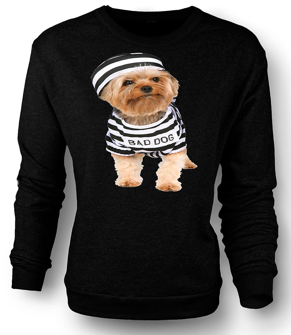 Mens Sweatshirt Yorkshire Terrier - chien maboul