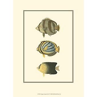 Antique Tropical Fish IV Poster Print by Vision studio (10 x 13)