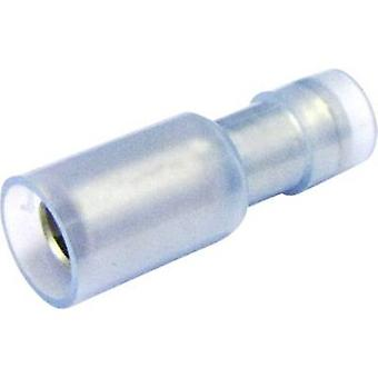 Bullet receptacle 1.50 mm² 2.50 mm² Pin diameter: 5 mm Insulated Blue (transparent) Cimco 180312 1 pc(s)