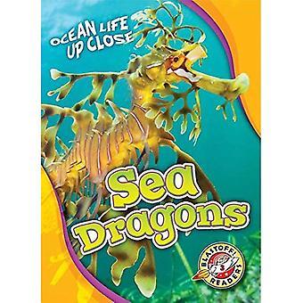 Sea Dragons (Ocean Life Up� Close)