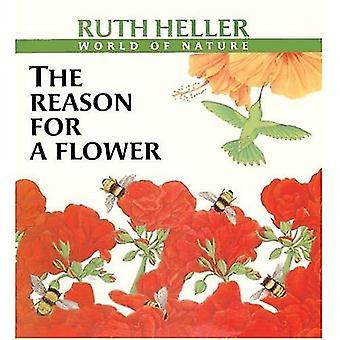 La raison d'une fleur (de Ruth Heller monde de la Nature)