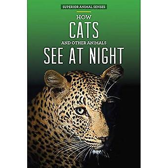 Comment les chats et autres animaux voir la nuit (sens Animal supérieurs)