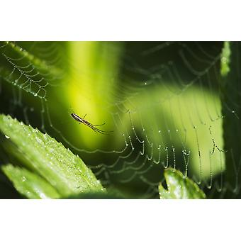 A spider waits in her web Astoria Oregon United States of America PosterPrint