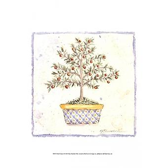 French Topiary II Poster Print by Nancy Shumaker (13 x 19)