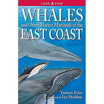 Whales and Other Marine Mammals of Atlantic Canada