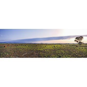 Gårdene ved solnedgang Vale Butte County i Sør-Dakota USA Poster trykk