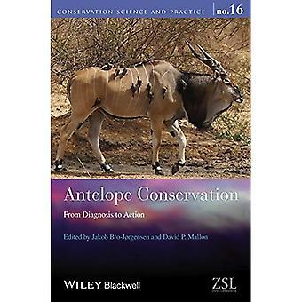 Conservação de antílope: Do diagnóstico à ação (ciência da conservação e prática)