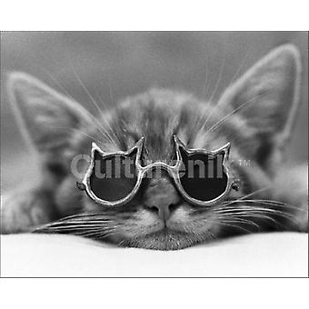 Cool Cat Sunglasses Poster Poster Print