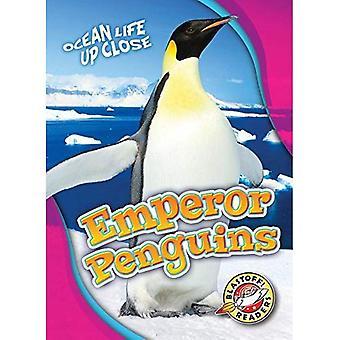 Emperor Penguins (Ocean Life Up Close)