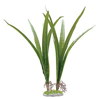Fluval Acorus Plant 36cm