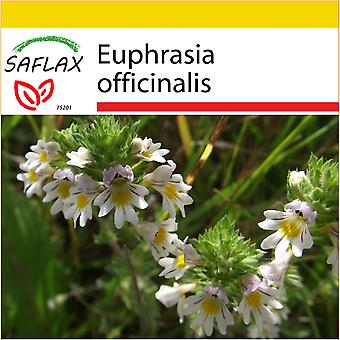 Saflax - Potting Set - 200 seeds - Eyebright - Euphraise de Rostkov - Eufrasia officinale - Eufrasia - Augentrost