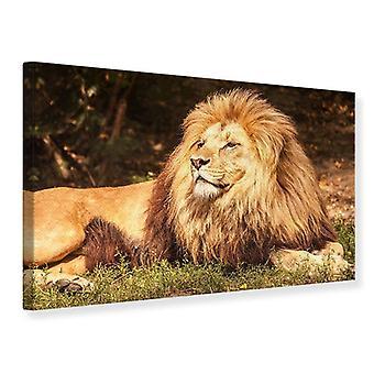 Lærred Print løve