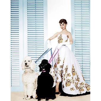 Sabrina Audrey Hepburn 1954 foto afdrukken