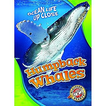 Baleines à bosse (vie océanique près)