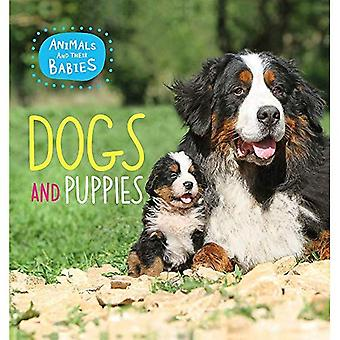Animals and their Babies: Dogs & puppies (Animals and their Babies)