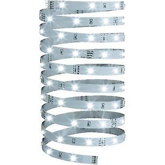 Tira de LED de Paulmann + enchufe 12 V 500 cm neutro blanco YourLED Eco 70257