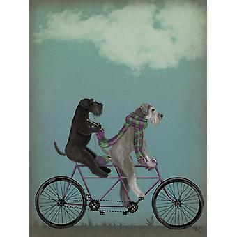 Schnauzer Tandem Poster Print by Fab Funky (13 x 19)