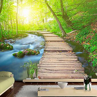 Wallpaper - Green forest