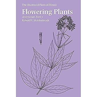 Angiospermas: Asteraceae, parte 3