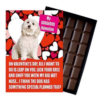Bichon Frise gåva för alla hjärtans dag presenterar för hundälskare boxed choklad
