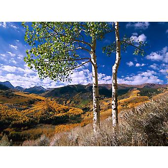 Aspen trees in fall-colors on Elk Mountains Capitol Creek trailhead Colorado Poster Print by Tim Fitzharris