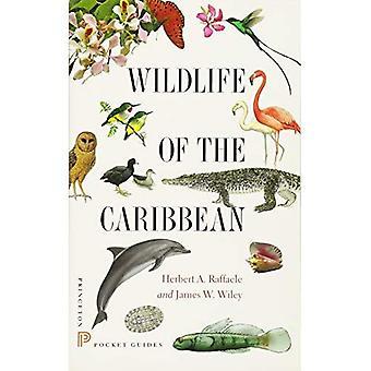 Faune de la Caraïbe (Guides de poche de Princeton)