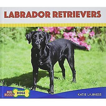 Labrador Retrievers (Big Buddy Dogs)