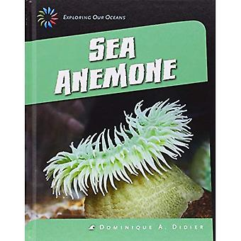 Sea Anemone (21st Century Skills Library: Exploring Our Oceans)