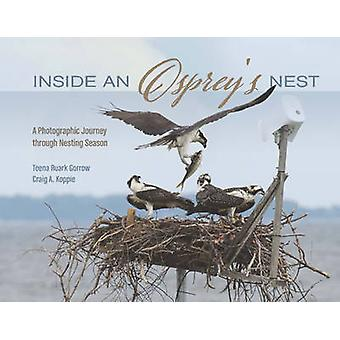 Inside an Osprey's Nest - A Photographic Journey Through Nesting Seaso