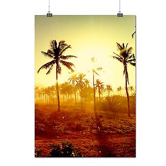 Matte or Glossy Poster with Sun Palm Photo Art Nature Nature Beauty | Wellcoda | *q1051