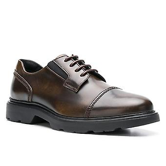 Hogan H393 MEMORY men's lace-ups in Medium Brown Leather with rubber sole