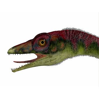Compsognathus dinosaur portrait Compsognathus was a small carnivorous theropod that lived during the Jurassic Period of Europe Poster Print