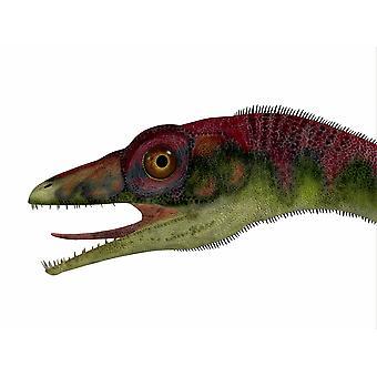 Compsognathus dinosaur portrett Compsognathus var en liten kjøttetende theropod som levde under den Jura periode av Europa plakatutskrift