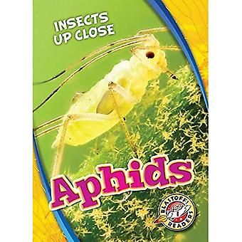 Aphids (Insects Up Close)