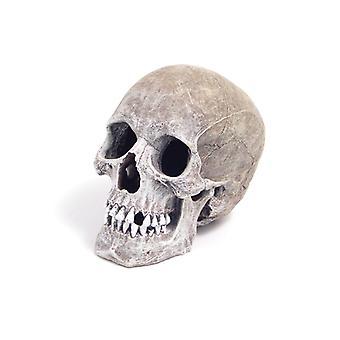 Cinta Azul Ornamento de vida como Human Skull 11 X17 X14cm