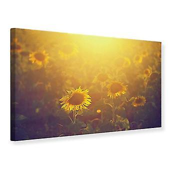 Canvas Print Sunflower In Golden Light