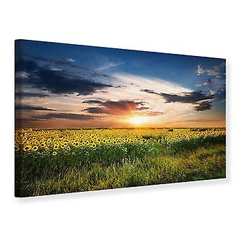 Canvas Print A Field Of Sunflowers
