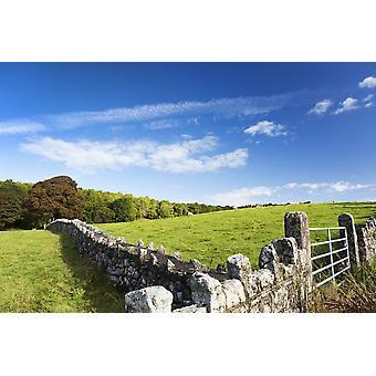 Gjerde rock med metall gate og gresskledd åsside med storfe beite trær og blå himmelen og skyene Nord Skien County Clare Irland PosterPrint