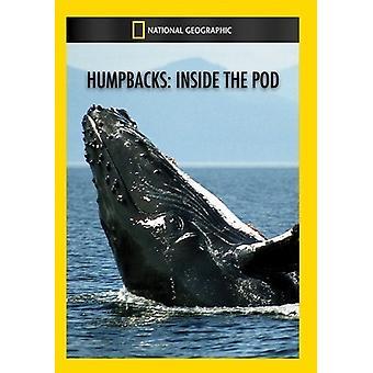 Humpbacks: Inside the Pod [DVD] USA import