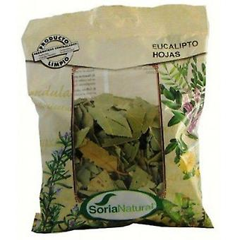 Soria Natural Eucalyptus leaves (Dietetics and nutrition)