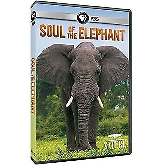 Nature: Soul of the Elephant [DVD] USA import