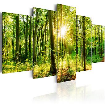 Canvas Print - Forest Tale
