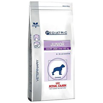 Royal Canin Pediatric Junior Giant Canine (Dogs , Dog Food , Veterinary diet , Dry Food)