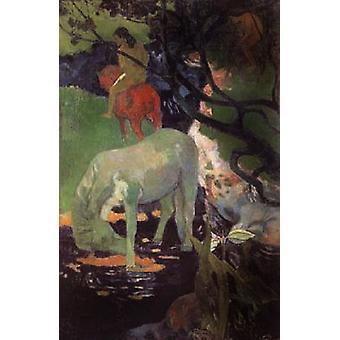 Het witte paard, Paul Gauguin, 40x60cm met lade