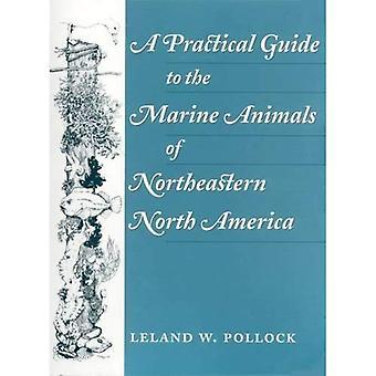 En praktisk Guide til havdyr i nordøstlige Nordamerika