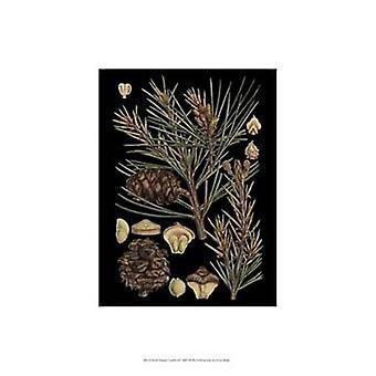 Small Dramatic Conifers II Poster Print (13 x 19)